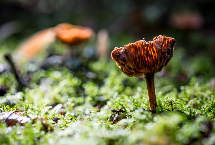 syksy syyskuu myrkyllinen sieni seitikki myrkkysieni (1 of 1)