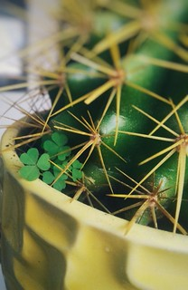 biosynthesis indicates the presence of harmony among creatures #nature #cactus