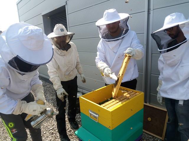 Le lycée Tony Garnier a récolté le miel des ruches installées sur le toit de l'établissement
