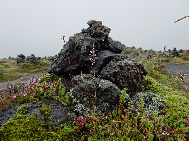 Flowers by a Stone Cairn