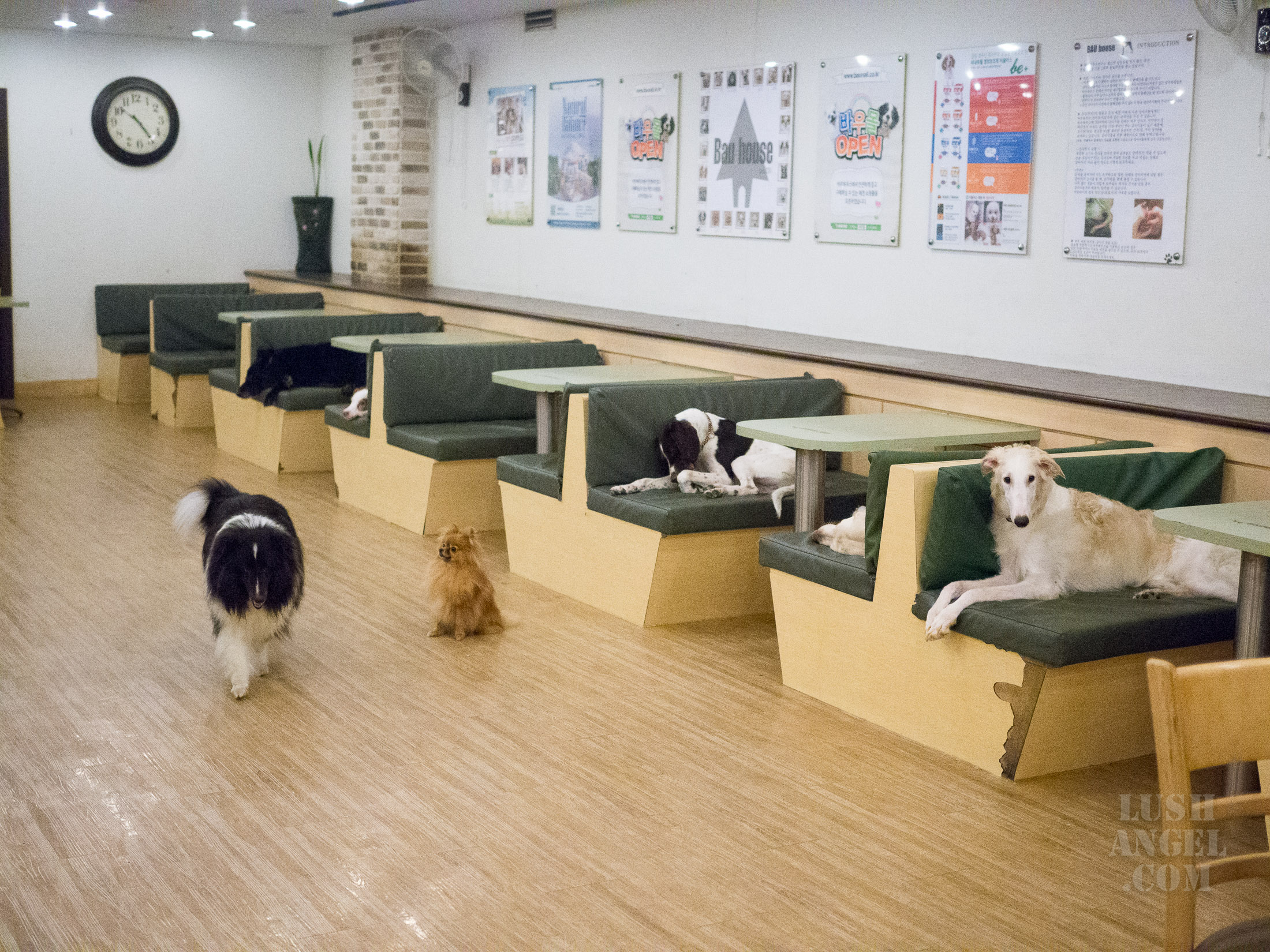 korea-dog-cafe