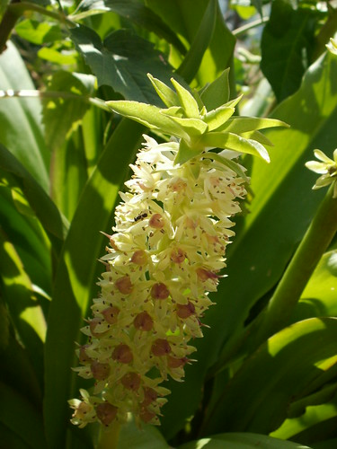 jardins d'été, jardins se plaisent 36041182960_9589f1c406