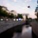 spider on the bridge by dusilda