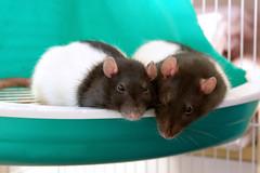 Teeco & Daisy: Snuggle time!