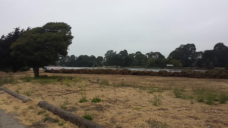 Algae piles at Berkeley Aquatic Park
