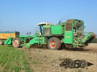 Avr Solanum-067