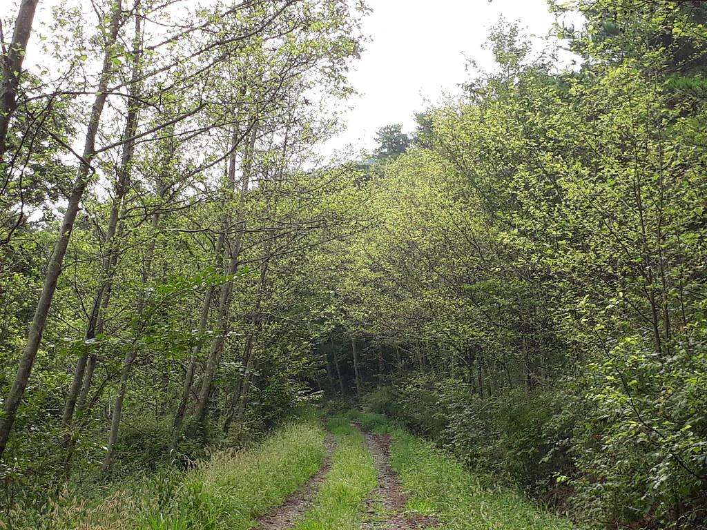 16-4-1 8월 물오리나무숲