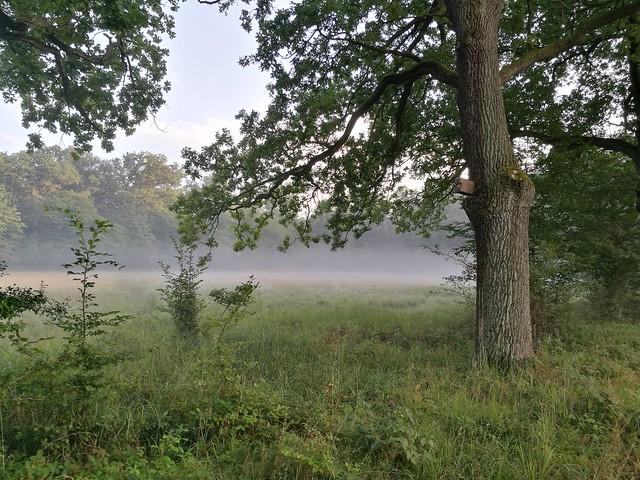 {EXPLORE} summer fog III