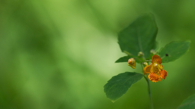 Vegetation - LaSalle Park-06661