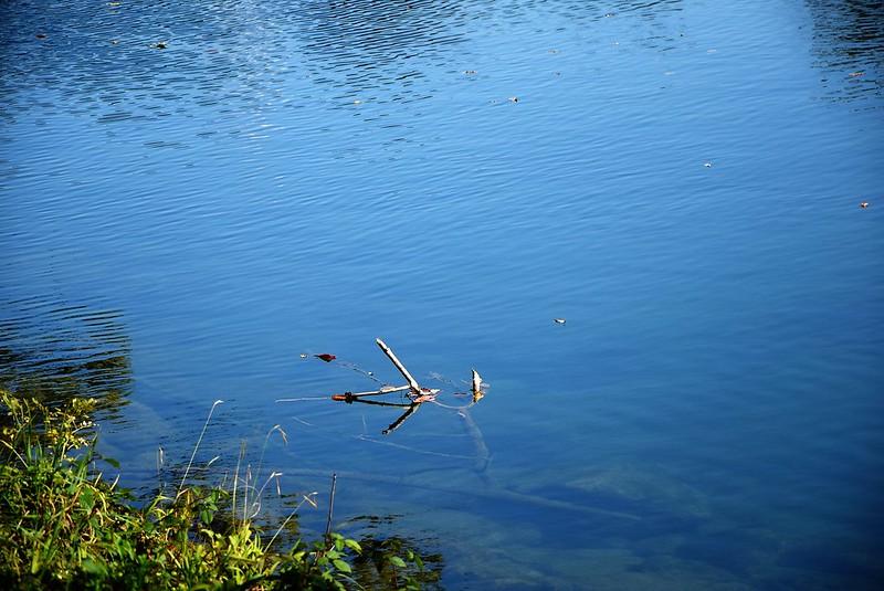 River Aar 27.09 (7)