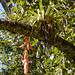 Epiphytes B296785focF por jvpowell