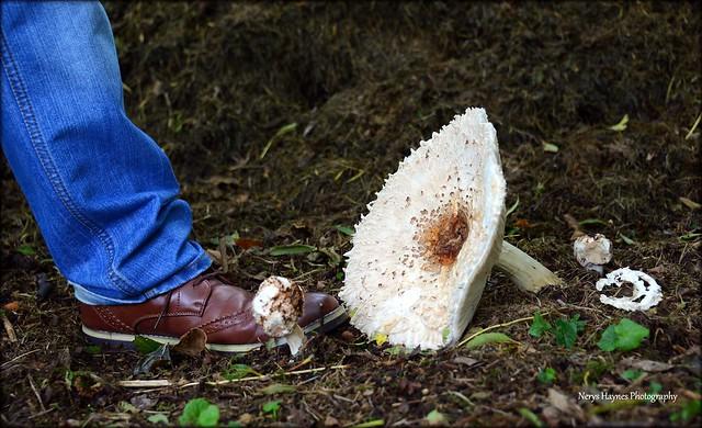 Big foot....gigantic toadstool at, Nikon D600, AF-S Nikkor 28-300mm f/3.5-5.6G ED VR