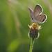 Blooming Butterfly! by Venu Dharmaji (a bit busy...)
