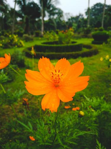 rangpur rangpurdivision bangladesh bd tajhat palace flower colors vivid contrast