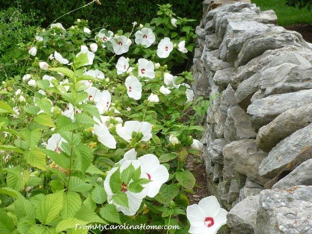 Kentucky Arboretum, Lexington at From My Carolina Home