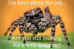 #spider #spiders #joke #funny #meme #mademelaugh #couldntresist #funnymemes #cute #cutespider #haha #lol #web #webdesigner #theoriginalwebdesigner