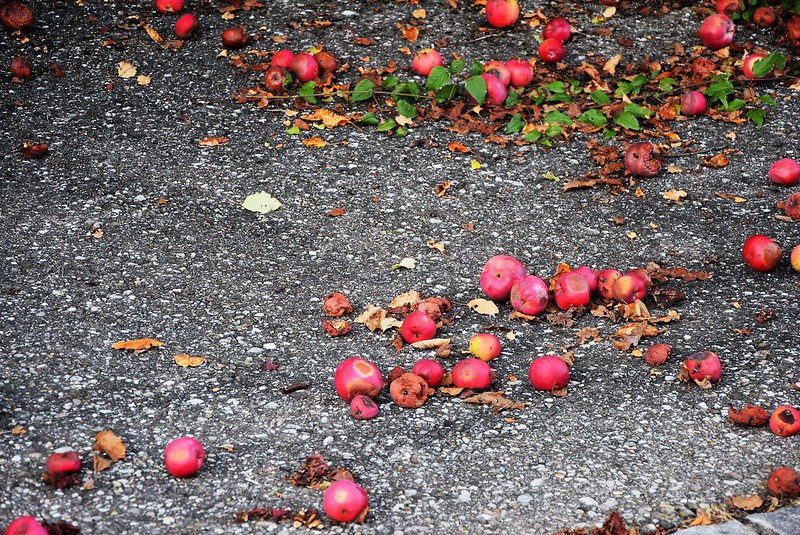 Apples 13.p08 (2)