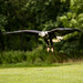 International Birds of Prey Centre (17)