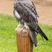 International Birds of Prey Centre (1)