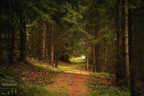 Märchenwald im Saaletal