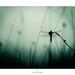 "Attentive au silence, ""elle-crut-s'y-fier"" by Naska Photographie"
