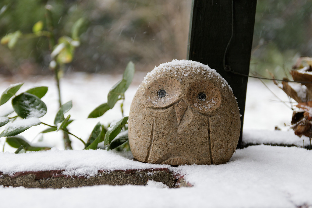 Our stone owl is dusted with snow