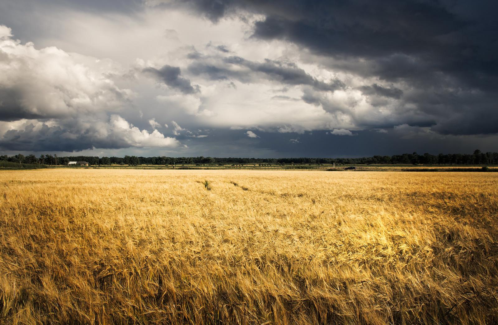 The Wheat Field, RICOH PENTAX K-3, Sigma 17-50mm F2.8 EX DC HSM
