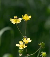 Bug on yellow