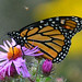 Butterfly has a buddy by ctberney