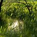 El sol a través del agua por elrayman210