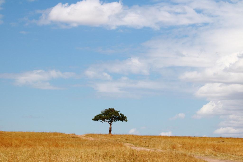 Lone tree amidst the savanna