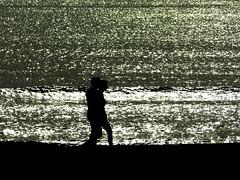 Ocultos entre brillos del mar