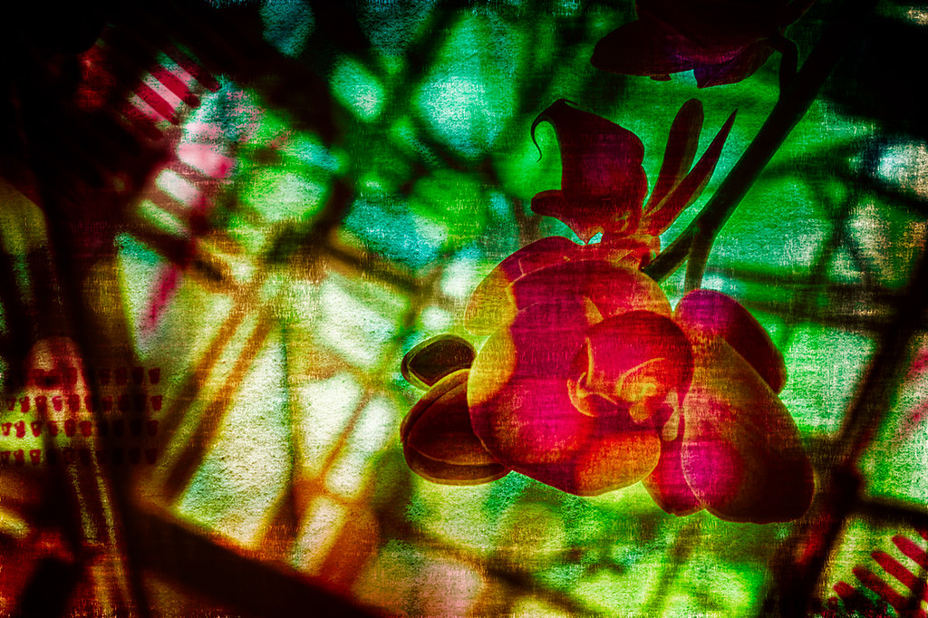 Abstract Orchid Photo