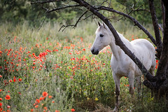 Camargue - Photo of Saussines