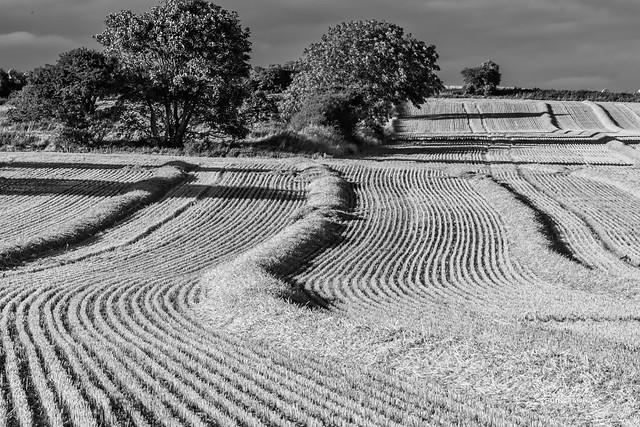 Cleadon Fields Mono