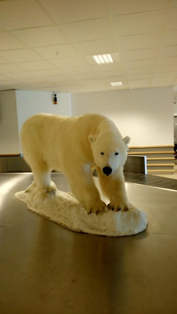 Polar Bear at the Airport