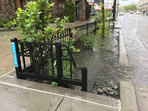 Rain Garden Construction: Flushing, Queens