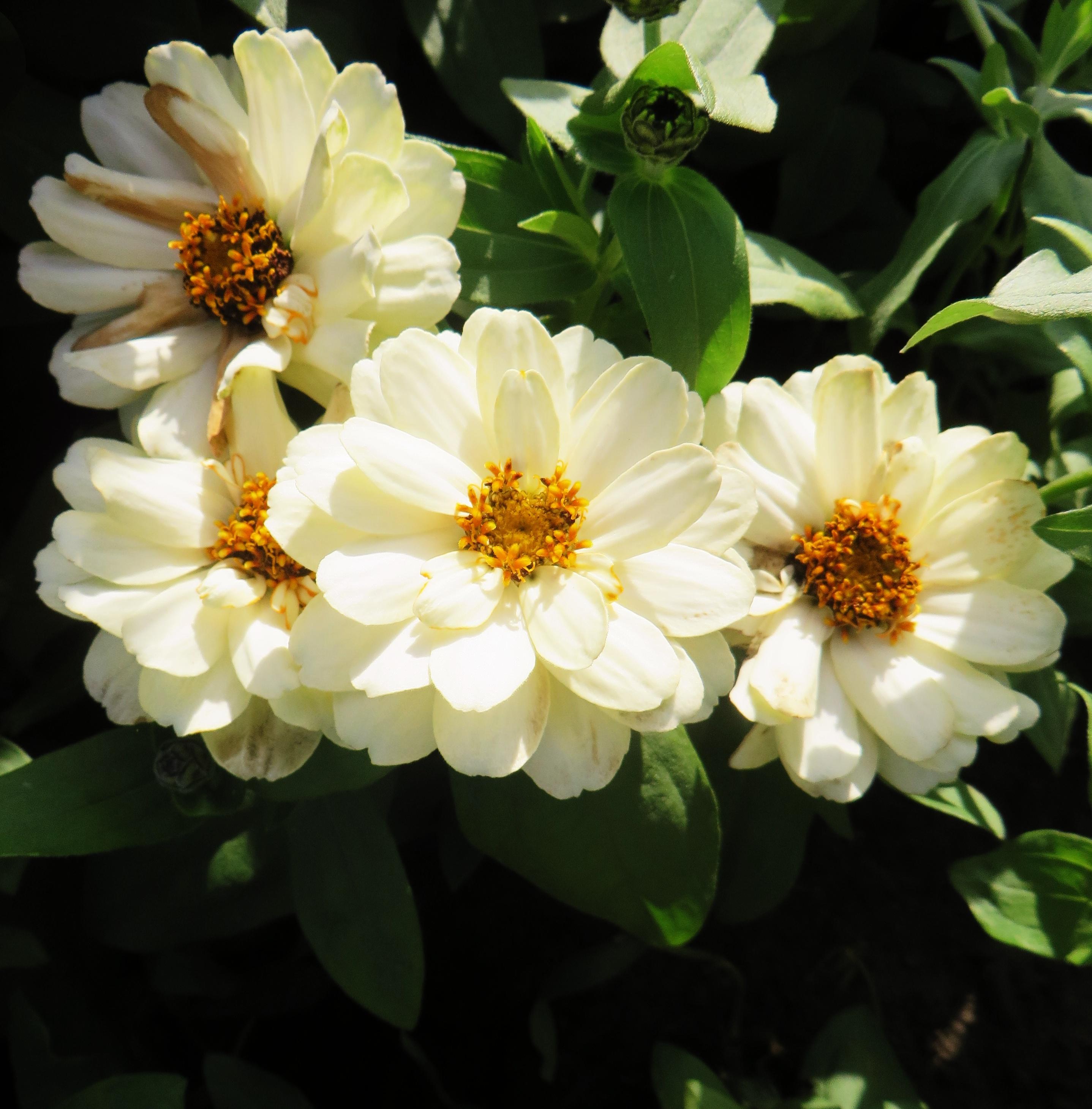 kukkijat2