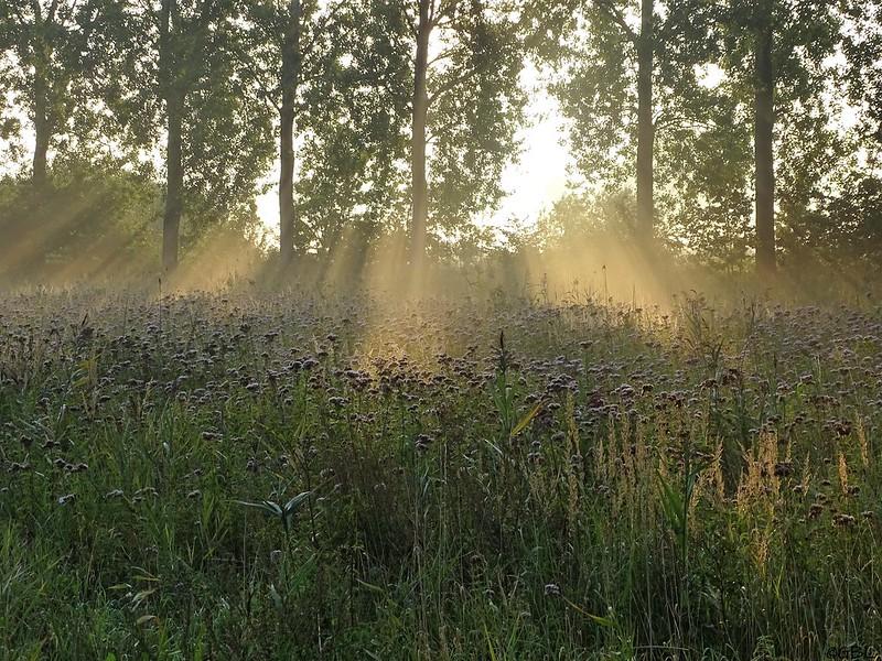 Groot eiland in de vroege ochtend