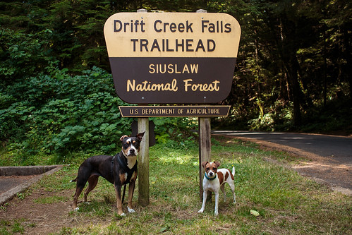 Drift Creek Falls-9851