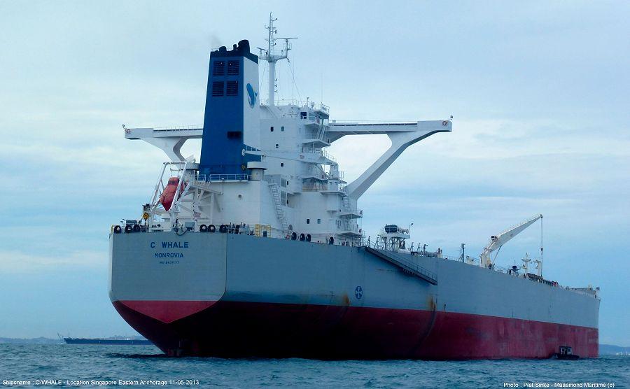 C Whale-5