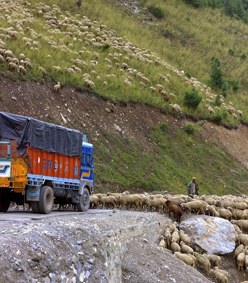 Sheep blocking the NH 1 on Srinagar Leh road trip
