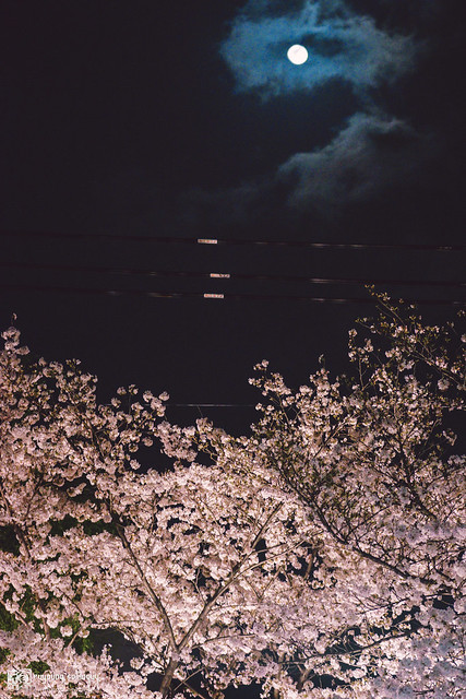 十年,京都四季 | 卷四 | 那兒春色滿城 | 30