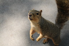 Squirrels in Ann Arbor at the University of Michigan (September 6th, 2017)