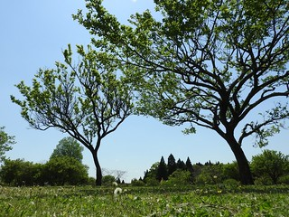 昭和の森 5 四季の道 09