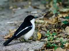 Maun,Botswana,birds