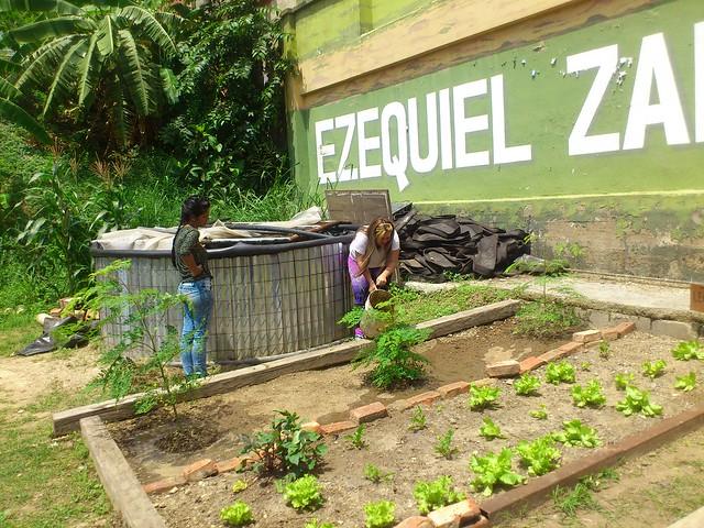 Bairros populares da Venezuela enfrentam crise de abastecimento com hortas urbanas