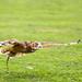 International Birds of Prey Centre (49)