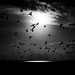 black water 100817-1 by chrisfriel