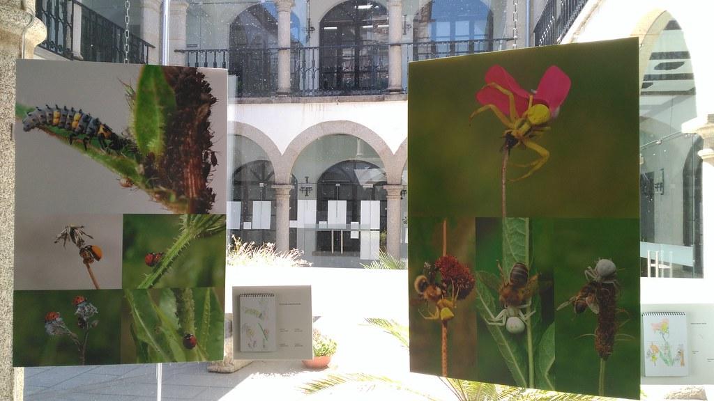 """La exposición """"Bichos"""" podrá visitarse hasta el 31 de agosto en el Patio de Cristal del Ayuntamiento de Coria"""
